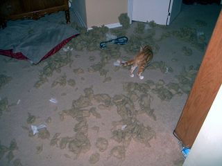 Dog bed disaster 1